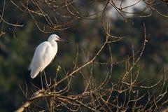 fågelegret Arkivfoton