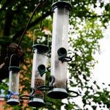 fågelförlagematare Arkivbilder