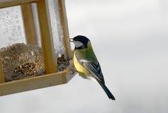 fågelförlagematare Arkivfoto