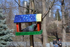 Fågelförlagematare 2 Arkivfoton