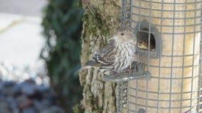 Fågelförlagematare Royaltyfri Foto