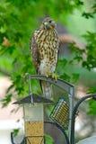 Fågelförlagematare? Royaltyfri Foto