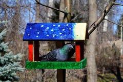 Fågelförlagematare med duvan Royaltyfri Fotografi