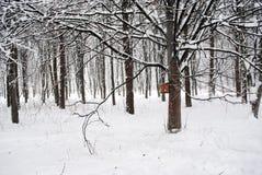 Fågelförlagematare på trädet i parkera Arkivbilder