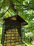 Fågelförlagematare som hänger från träd arkivbilder