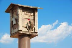 Fågelförlagematare. trädhus för fåglarna med den röda hatten för jul Arkivfoton