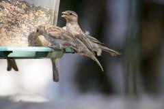 Fågelförlagematarelineup Royaltyfria Bilder