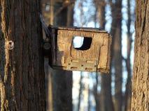 Fågelförlagemataren på trädet Arkivfoto