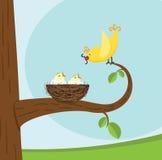 fågelfamilj Arkivbild