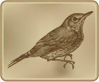 Fågelfieldfare, hand-teckning. Vektorillustration. vektor illustrationer
