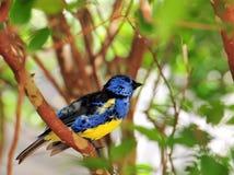 fågelfinch royaltyfri fotografi