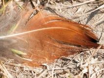 Fågelfjäder på jordningen Arkivfoton