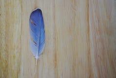 Fågelfjäder på träbräde royaltyfri fotografi