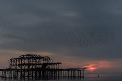 Fågelflock över Brighton den västra pir på solnedgången Royaltyfria Foton
