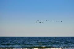 Fågelflock över havet av Azov Arkivfoto