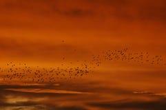 fågelflock Royaltyfri Foto