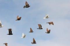 fågelflyg arkivfoton