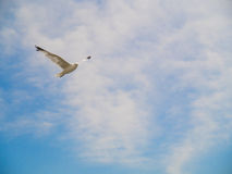 Fågelflyg i blå himmel arkivbilder