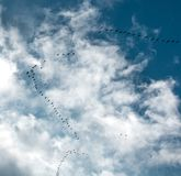 Fågelflygkil mot den blåa himlen Royaltyfri Bild