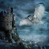fågelflygowl royaltyfria bilder