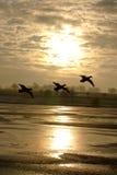 fågelflygsolnedgång Arkivfoton