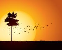 Fågelflyttning till och med stillsam solnedgångplats Arkivbild