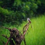 Fågelfotografi royaltyfria bilder
