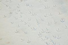Fågelfotspår i snö Fotografering för Bildbyråer