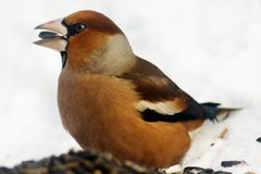 fågelfrossare arkivfoto
