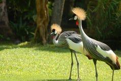 fågelgräs Arkivfoton