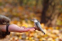 fågelhand royaltyfri fotografi