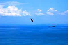fågelhav över havet royaltyfri fotografi