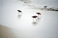 fågelhav arkivbilder