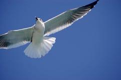 fågelhav Arkivfoto