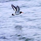 fågelhav Royaltyfri Foto