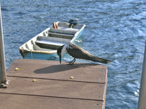 fågelhavhav Royaltyfria Bilder
