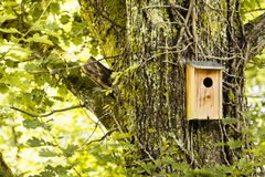 Fågelhus i en skog Royaltyfria Bilder