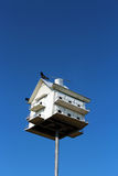 Fågelhus i himlen Fotografering för Bildbyråer