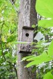 Fågelhus i skogen royaltyfri bild