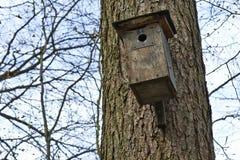 Fågelhus i träd Fotografering för Bildbyråer