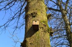Fågelhus på eken. Arkivbild