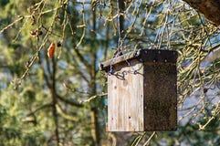 Fågelhus på en tree Fotografering för Bildbyråer