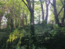 Fågelhus på ett träd, i skogen Arkivbild