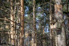 Fågelhus på tree arkivfoton