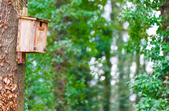 Fågelhus, träd Royaltyfri Fotografi
