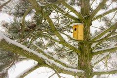 Fågelhuset på snöig sörjer trädet Arkivfoton