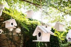 Fågelhuset på träd i Autumn Fall Sunshine & gräsplan lämnar bokeh Royaltyfria Foton