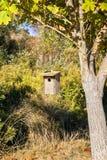 Fågelhuset som hänger från en trädfilial, det Rancho San Antonio länet, parkerar, södra San Francisco Bay område, Kalifornien royaltyfria foton