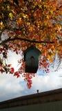 Fågelhusträd Arkivfoto