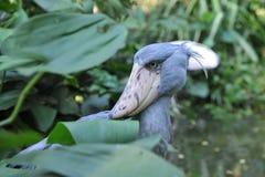 Fågelhuvud Arkivbild